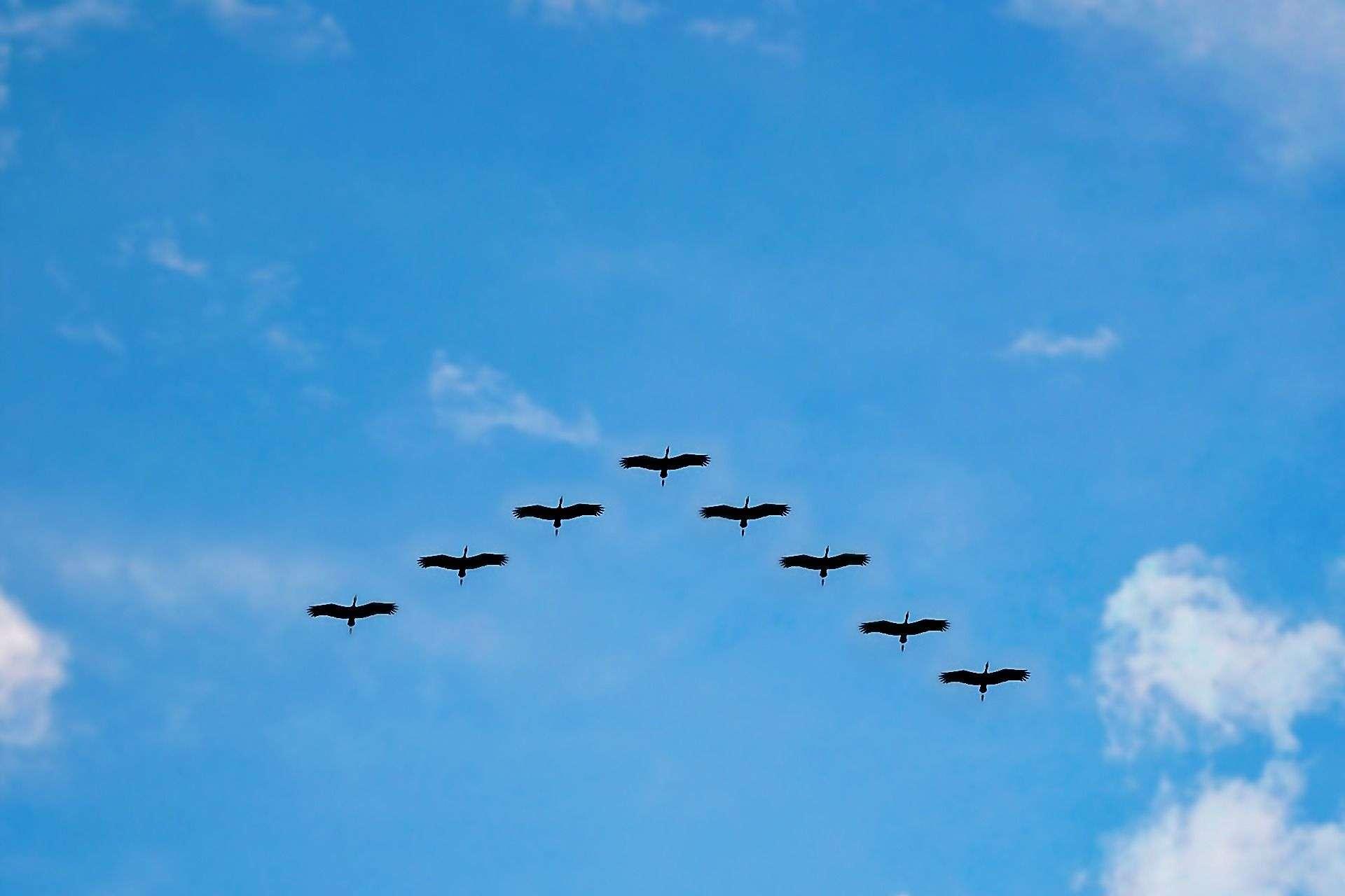 birds-high-fly-flying-migrating-62667.jpeg